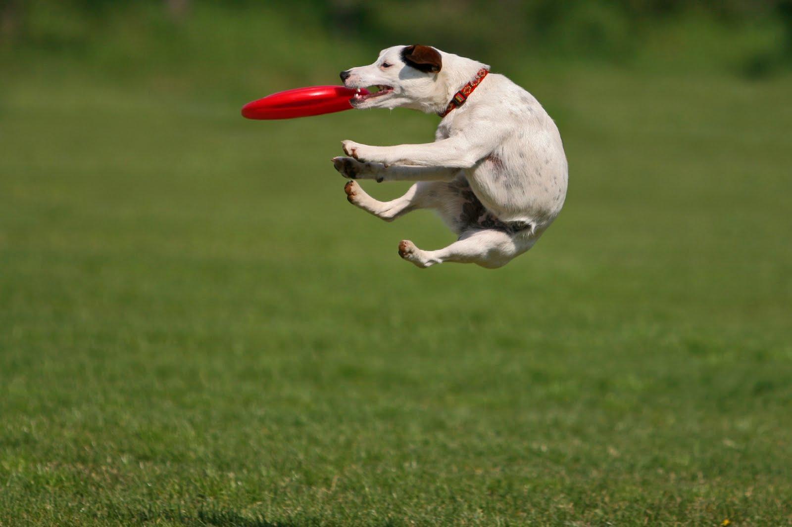 Frisbee in het park